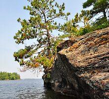 Precarious Pine by Nancy Barrett