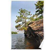 Precarious Pine Poster