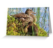 Ducks settling down for the night at Glencoe lochan Greeting Card