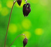 Flower by mkgolder