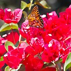 Butterfly on Bougainvillea by corsefoto