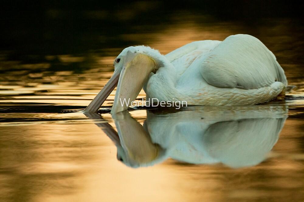 White on Gold by Sheri L Gladish