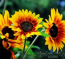 Sunflowers by AmyBuchmeier