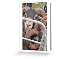Black face rams Greeting Card