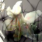 Lily Dreams by Greta  McLaughlin