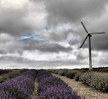 Lavender and Turbine by milesphotos