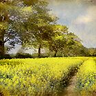 Follow Your Own Path by Jean Turner
