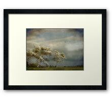 May Time Framed Print