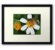 Bee business Framed Print