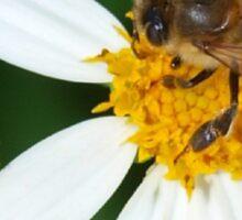 Bee business Sticker