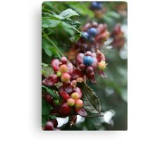 Berry Berry Quite Contrary Metal Print