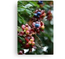 Berry Berry Quite Contrary Canvas Print