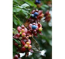 Berry Berry Quite Contrary Photographic Print