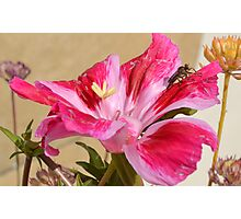 Pink flower and bug Photographic Print
