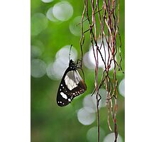 Butterfly#3 Photographic Print