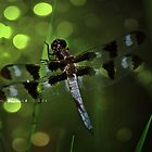 Dragonfly by Lisa Bianchi