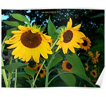 Evening Sun...Flowers - Unframed Poster