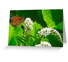 Grazing Monarch Greeting Card