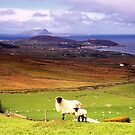 Clew Bay Co. Mayo by Michael Walsh