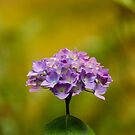 A single bouquet   by ZWC Photography