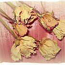 Aged Beauty - Dried Roses by EdsMum
