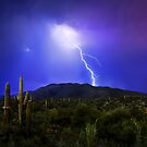 Saguaro Strike by MattGranz
