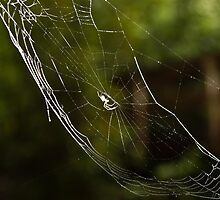 Kiss of the Spider by KSKphotography