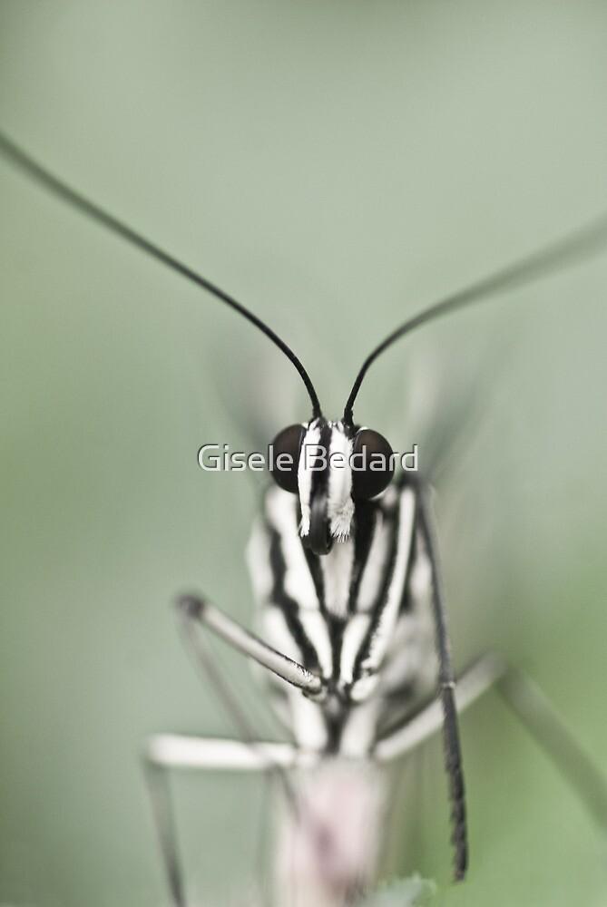 Butterfly by Gisele Bedard