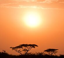 Ethiopian Sunset by Karen Millard