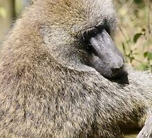 Olive Baboon by Linda Sparks