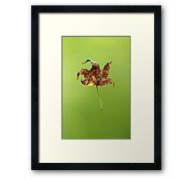 Levitation Framed Print
