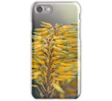 Aloe (Aloe berhana) in Africa iPhone Case/Skin