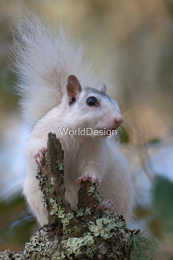 Astronaut Squirrel by William C. Gladish
