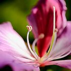 Pink Flower along Brisbane River  by Jaxybelle