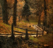 Wooded Path by Jessica Jenney