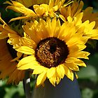 Sunflowers! by Melodee Scofield