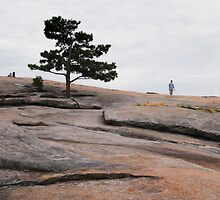 Stone Mountain Walker by Leo Hohmann