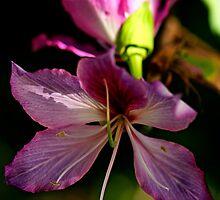 Pink Flowering Tree by Jaxybelle