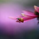 Ladybird on pink flower by Ellen van Deelen