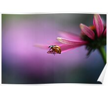 Ladybird on pink flower Poster
