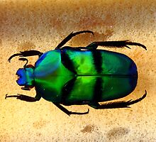 Beautiful colours on a Bug by thermosoflask