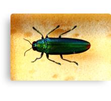 beautifully coloured bug Canvas Print