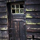New life in an old window by Javimage