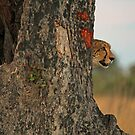 Lurking danger by Explorations Africa Dan MacKenzie