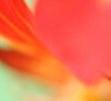 Flower Power by Jade McCook