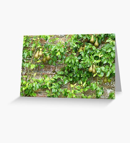 Espaliered Conference Pears Greeting Card