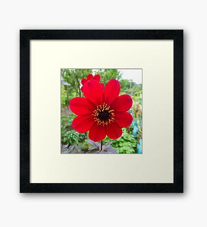 Red Velvet Framed Print