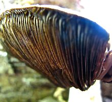 Underside of a mushroom cap by MarianBendeth