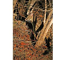 Nocturnal hunter Photographic Print