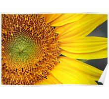 Sunflower Seeds Poster